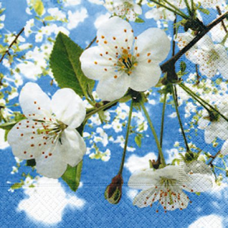 servietten mit kirschbl ten f r ihre tafel im fr hling blossoms in the sky. Black Bedroom Furniture Sets. Home Design Ideas
