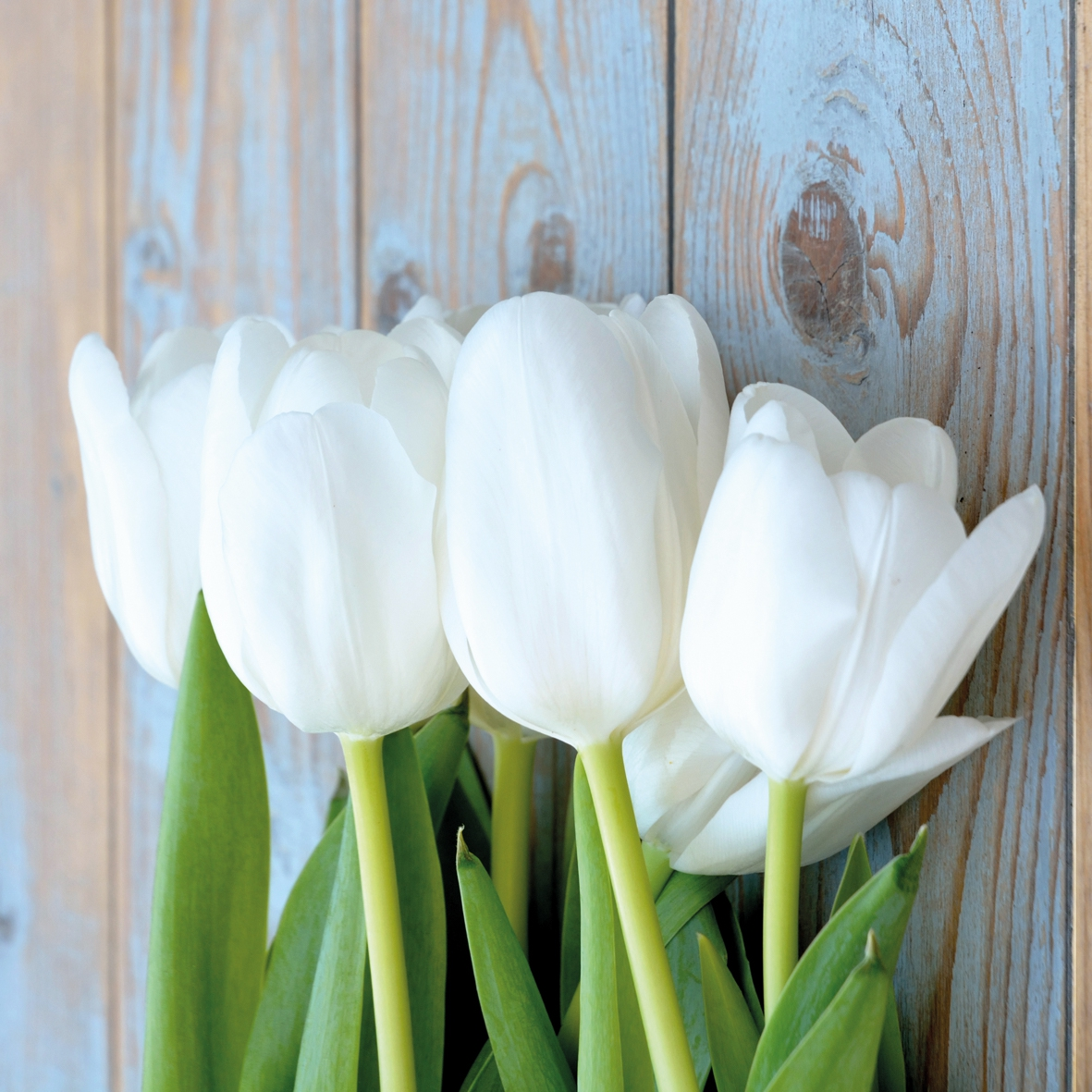 Servietten Weisse Tulpen White Tulips On Wood